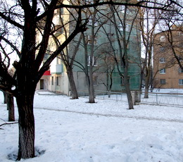 Деревья на Дворцовой